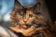Helping You To Better Understand Cats In The Following Article -- More info could be found at the image url. #LovelyCats