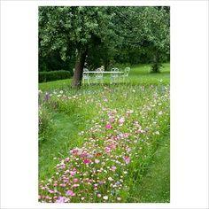 Meadow flowers in our garden