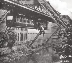 Tuffi/Wuppersprung; 21. Juli 1950