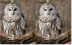 A before and after comparison of the High Pass sharpening effect. Image © 2016 Photoshop Essentials.com