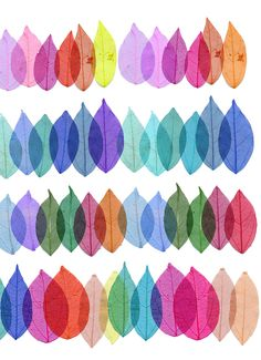 Folhas e cores