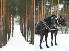 Pure Happiness is… horse-drawn sleigh rides, winter bonfires and rosy cheeks
