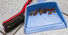 rimedio scarafaggi