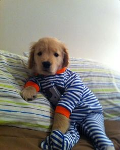 """""""But I'm not tired!""""    This reminds me of dressing my animals in clothing of all sorts, when I was a kid."""