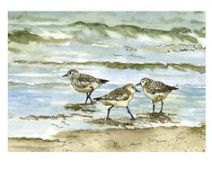 Sandpipers, Birds on the Beach, Pen and Ink Watercolor Painting at Shoreline, Surf, Ocean, Waves, Water, Sea Green, Sea Foam Blue, Art Print...