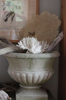 Shell Collection - Cement Urn