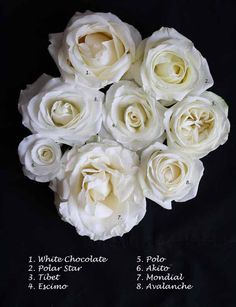 Flirty Fleurs White Rose Study -  Mondial, Avalanche, Akito, Polo, Escimo, Tibet, Polar Star, White Chocolate