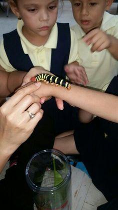 Cada segmentos del tórax tiene un par de patas articuladas y provistas de uñas, son las patas verdaderas.