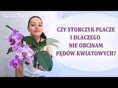 Czy #storczyk płacze i dlaczego nie obcinam przekwitłych pędów - YouTube Plants, Film, Youtube, Gardening, Healthy, Art, Movie, Art Background, Film Stock