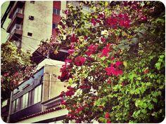464 - Fim de Agosto #umafotopordia #picoftheday #brasil #brazil #n8 #snapseed #pixlromatic+