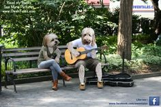 Secret Photo, Service Dogs, Sign Language, One Pic, New Books, The Secret, Photos, Pictures, Nyc