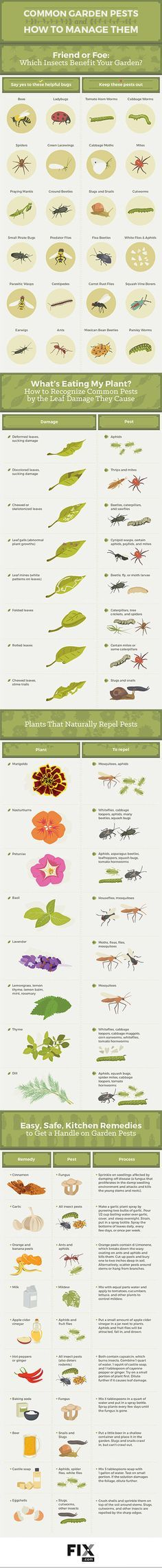 Gardening Cheat Sheets - Good and bad bugs. (click thru for lots more GCS) / The Garden Glove
