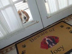 Фотография PET PICS I LIKE Group Board Pinterest - 18 ferocious dogs posing beside their beware of dog signs