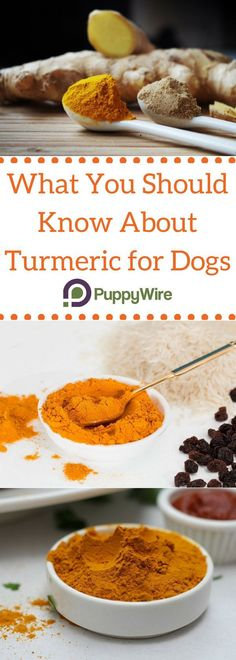 Everything you need to know about turmeric for dogs along with recipes, benefits of turmeric for dogs with arthritis and cancer, and much more.