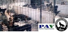 Petition · The Minister of Health Beatrice Lorenzin: STOP stray dogs! We call…