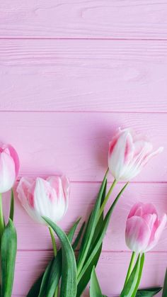 Tulip, flowers, fresh, wallpaper - Best of Wallpapers for Andriod and ios Flower Background Wallpaper, Flower Phone Wallpaper, Flower Backgrounds, Wallpaper Backgrounds, Iphone Wallpaper, Pink Tulips, Tulips Flowers, Spring Wallpaper, Poster Design
