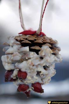 Vogelfutter selber machen - Zapfen am Baum