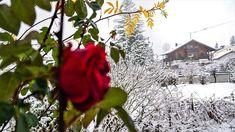 🇷🇺 Зима в Австрии❄🌺❄ Всем чудесных предновогодних выходных!☃️ 🇬🇧 Winter in Austria❄🌺❄ Have a wonderful weekend everyone!☃️ 🚘 Private transfers in the Alps 🔸️ Travel with us comfortably and safely🔸️ ✔ alpinbus.com 🚘 Частные трансферы в Альпах 🔸️Путешествуйте с нами комфортно и безопасно🔸️ ✔ alpinbus.ru Snow, Outdoor, Outdoors, Outdoor Games, Outdoor Living, Eyes