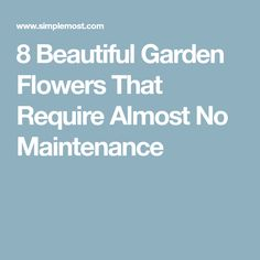 8 Beautiful Garden Flowers That Require Almost No Maintenance
