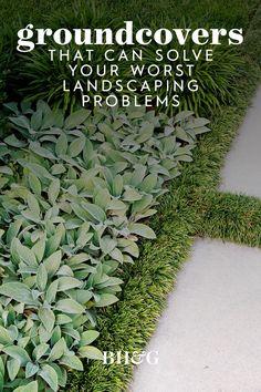Outdoor Landscaping, Outdoor Gardens, Landscaping Plants, Fresco, Ground Cover Plants, Outdoor Crafts, Garden Projects, Garden Plants, Landscape Design
