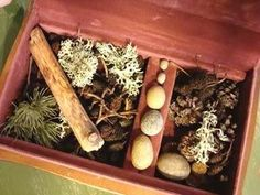 preschool nature collections and displays