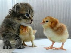 Four Times Cats Were Actually Kinda Nice - CHICK MAGNET - Cats, Pet Photo Special : People.com