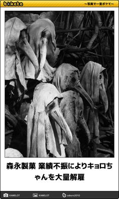 Bizarre medical history -- these are masks worn by doctors during the Plague. The beaks held scented substances. Top Photos, Black Death, Arte Horror, Vintage Halloween, Creepy Vintage, Creepy Halloween, Vintage Goth, Halloween Images, Halloween Candy