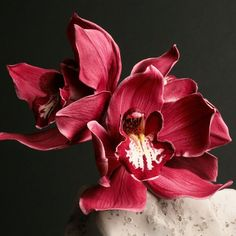 "Sugar Cymbidium orchid by Robert Haynes. Photo ©Tony Harris London-based sugar artist Robert Haynes specializes in creating, and teaching others how to make, ""botanically correct sugar flowers. Clay Flowers, Sugar Flowers, Edible Cake Decorations, Wedding Decorations, Gum Paste Flowers, Flower Studio, Still Life Photos, Cymbidium Orchids, Fondant"