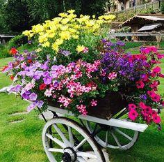 Beautiful flowers <3