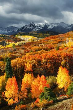 Beautiful Colorado  ......A slow drive through the Colorado Rockies (with a thermos of ?!) to enjoy the aspen leaves in full glory