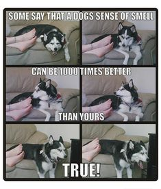New funny dogs pictures hilarious lol ideas Funny Animal Jokes, Funny Dog Memes, Cute Funny Animals, Funny Relatable Memes, Cute Baby Animals, Haha Funny, Funny Cute, Funny Dogs, Cute Dogs
