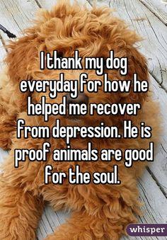Thank you Pets.