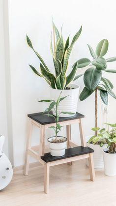 IKEA Bekvam step stool as plant shelf. Decor, Ikea Bekvam, Ikea, Ikea Plants, Ikea Step Stool, Plant Decor, Plant Shelves, Plant Table, Indoor Plants