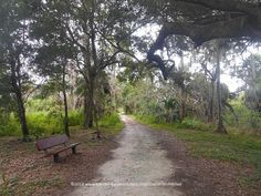 A view of the trails at St. Petersburg's Boyd Hill Nature Preserve #Florida #hiking