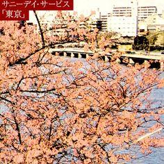 名盤:サニーデイ・サービス「東京」  爺婆になってもこれを聴けば、上京したての若者にすぅーっと戻る魔法のレコード。「恋におちたら」の乙女は今何処。