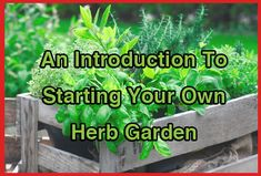 Starting Your Own Herb Garden
