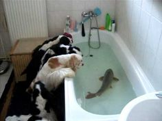 Dogs React To Finding a FISH In Their Bathtub!!!