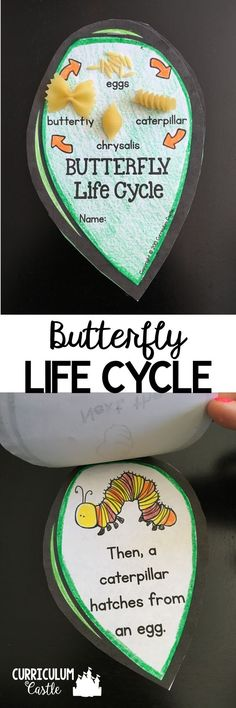 Butterfly and Frog Life Cycle Investigation - Creatures and Nature - Butterfly Life Cycle Mini Leaf Book! Makes an adorable butterfly craft and activity. Just add pasta - 1st Grade Science, Kindergarten Science, Teaching Science, Science For Kids, Science Activities, Sequencing Activities, Classroom Crafts, Classroom Activities, Preschool Crafts