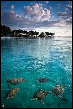 waters off #Indonesia ウミガメ~♡