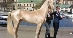 6 Horses That Look Like They've Been Dipped in Liquid Gold.