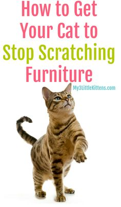 Cat Care Tips How to Get Your Cat to Stop Scratching Furniture. Prevent Your Kitty From Scratching With These Ideas! - Are you wondering how to get your cat to stop scratching furniture? It's an instinct for them, and it's just something they will do. Cat Care Tips, Pet Care, Pet Tips, Stop Cat Scratching Furniture, Scratching Post, Getting A Kitten, Cat Info, Cat Hacks, Kitten Care