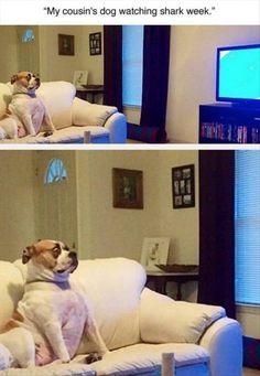 """My cousin's dog watching shark week"""