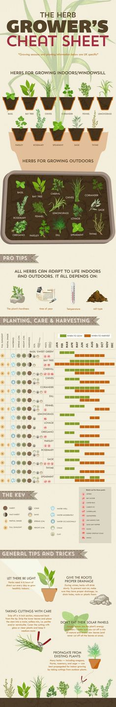 This chart will help you grow herbs like a pro: THE BEST HOME GARDENING GUIDE IS WAITING FOR YOU.