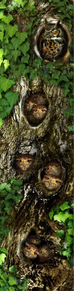 .Owl camouflage