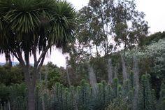 Wood plant blog: Trees