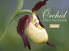 Daniel Stowe Botanical Gardens...my niece & her family go there and get great photos! Now they're having an orchid spectacular this month and I can't get over how amazing that picture is!! MUST SEE IN PERSON!