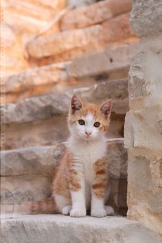 Where do you reckon those steps would lead to? Hopefully to more cute kittens like this one. Cute Cats And Kittens, I Love Cats, Crazy Cats, Cool Cats, Kittens Cutest, Ragdoll Kittens, Bengal Cats, Pretty Cats, Dog Cat