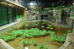 Gators?! How about some nice friendly turtles and fish instead?   The ultimate indoor gator home!!