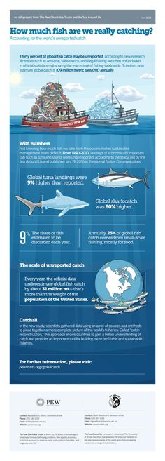 """Countries drastically underreport the number of fish caught worldwide, according to a new study, and the numbers obscure a significant decline in the total catch. """"This groundbreaking study confirms that we are taking far more fish from our oceans than the official data suggest,"""" said Joshua S. Reichert, executive vice president and head of environment initiatives for Pew. """"It's no longer acceptable to mark down artisanal, subsistence, or bycatch catch data as a zero in the official record…"""