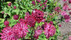aantrekkelijk voor bijen, vlinders en vogels.